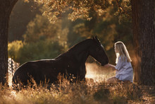 Portrait Of Beautiful Young Woman With Blond Hair Sitting In Front Of Lying Horse And Feed It From Hands In Sunset Sunlight In Autumn