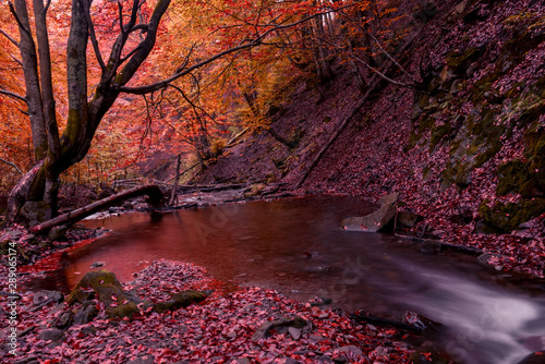 Recess Fitting Bordeaux Small creek waterfall in a beautiful deciduous autumn forest. Bright autumn leaves on stones covered with moss by the river. Beautiful autumn landscape. Long exposure.