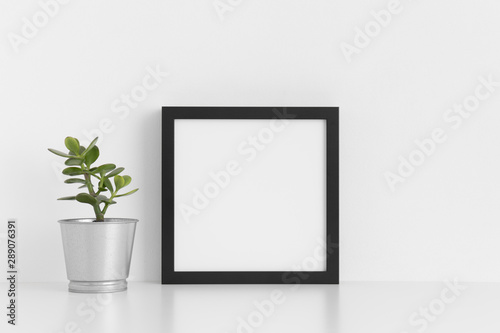 Fototapety, obrazy: Black square frame mockup with a crassula in a pot on a white table.