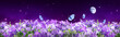 Leinwandbild Motiv Fairytale fantasy background of magical purple dark night sky with shining stars, moon, bluebells campanula flowers garden and flying blue butterflies. Photo of moon is taken by me with my camera.
