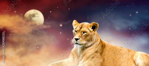Obraz na plátně African lioness and moon night in Africa