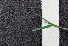 Asphalt Road And Green Grass On White Dividing Lines. - Background For Transportation.