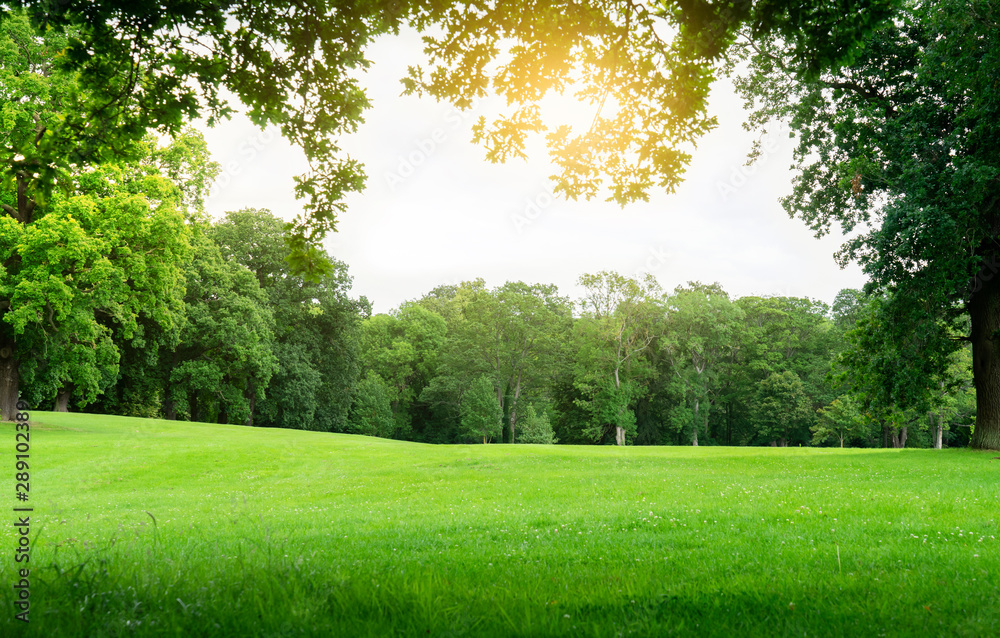 Fototapeta Fresh air and beautiful natural landscape of meadow with green tree  in the sunny day for summer background, Beautiful lanscape of grass field with forest trees and environment public park with sun ra