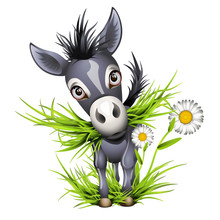 Little Shaggy Grey Donkey