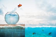 Goldfish Leaps Out Of The Aqua...