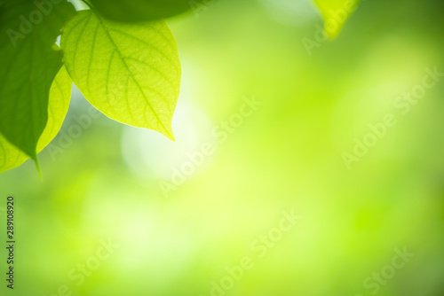 Foto auf Gartenposter Lime grun Green nature background. Closeup view of green leaf with beauty bokeh under sunlight for natural and freshness wallpaper concept.