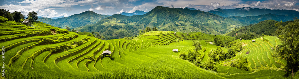 Fototapety, obrazy: Landscape panorama of Vietnam, terraced rice fields of Hoang Su Phi district, Ha Giang province. Spectacular rice fields. Stitched panorama shot.