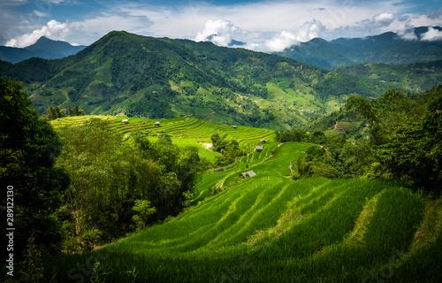 Foto auf Gartenposter Reisfelder Landscape of Vietnam, terraced rice fields of Hoang Su Phi district, Ha Giang province. Spectacular rice fields.