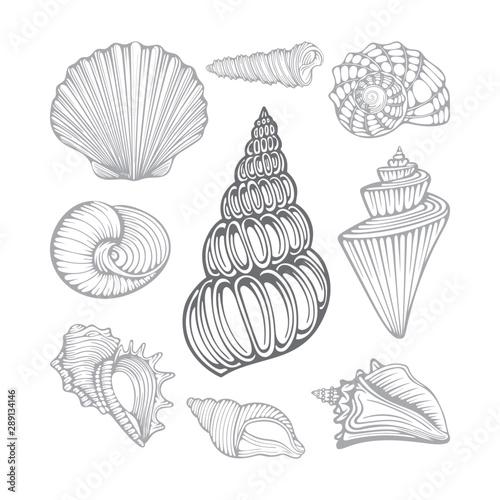 Valokuva Seashells