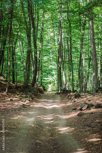 Fototapeten Wald Beech grove landscape with a walkway path