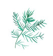 Watercolor a Christmas fir-tree branch in the Scandinavian style