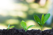 canvas print picture - young plant growth, sustainable development