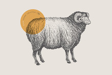 Graphic Hand-drawn Ram On A Re...