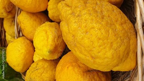 Fototapeta Basket full of fresh ripe diamante citron