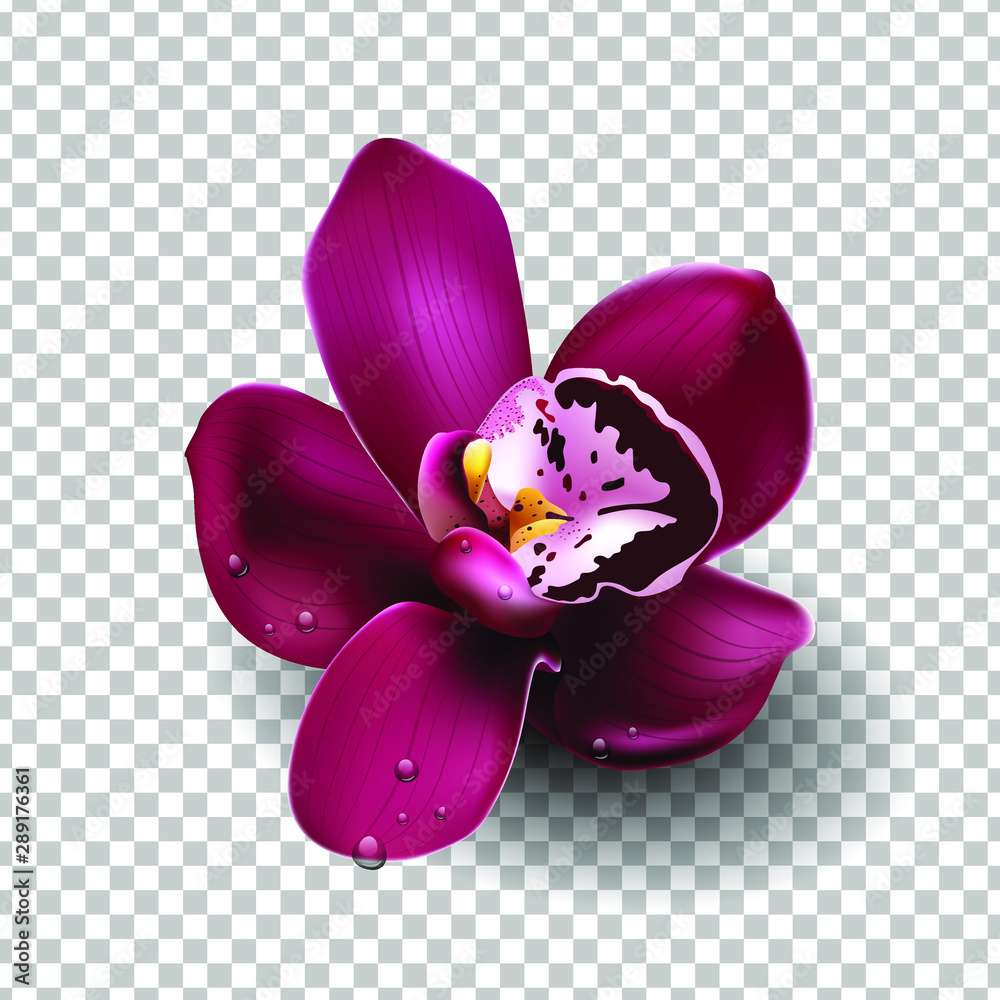 Fototapety, obrazy: Beautiful tropical flower on transparent bacground, orchid, blooming, decoration. Realistic flower, vector illustration. EPS10