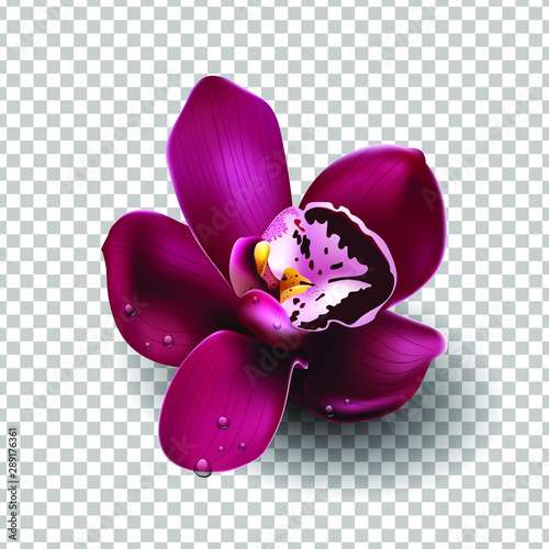 Beautiful tropical flower on transparent bacground, orchid, blooming, decoration. Realistic flower, vector illustration. EPS10