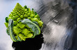 Amazing fresh green Romanesco broccoli or Roman cauliflower on wet dark background. Its form is a natural approximation of a fractal. Close up view.