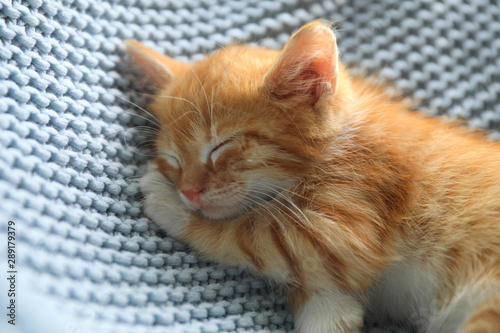 Sleeping cute little red kitten on light blue blanket, closeup view - 289179379