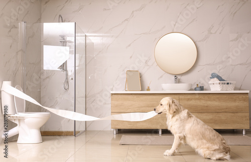 Cute Golden Labrador Retriever playing with toilet paper in bathroom Wallpaper Mural