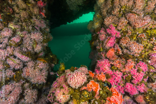 Oil rig underwater structure covered in soft coral
