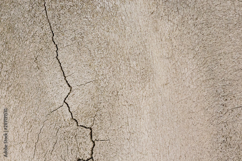 Photo  Close-up photography of crack on the bone