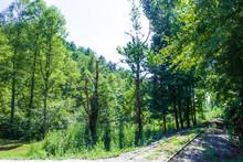A Disused Overgrown Railway Li...
