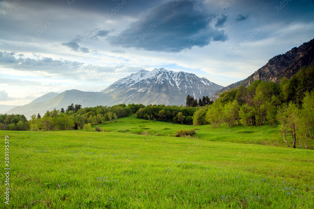 Fototapety, obrazy: Green meadow in the Wasatch Mountains, Utah, USA.