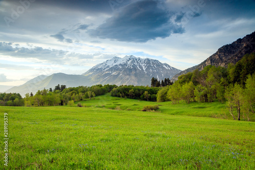 Green meadow in the Wasatch Mountains, Utah, USA. - 289195379