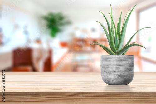 Photo Cement Vase with aloe vera on vase pot on table