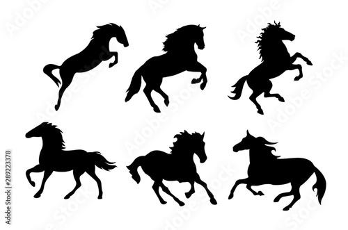 Fototapeta Running and jumping horse silhouette. obraz