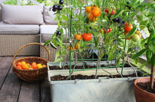 Container Vegetables Gardening...
