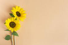 Two Beautiful Sunflowers On Orange Pastel Background.