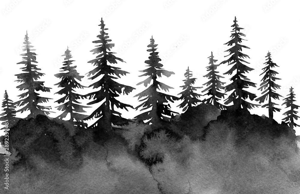 Fototapety, obrazy: black gloomy forest, spruce watercolor, background