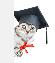Graduated Cat With Diploma Peeking Behind Empty Banner. Isolated On White Background
