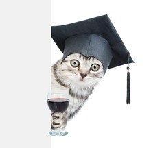 Surprised Cat With Black Graduation Cap Behind Empty White Board Holding Glass Of Red Wine. Isolated On White Background