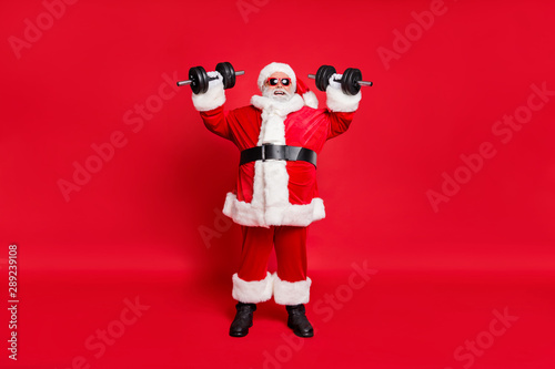 Fototapeta Full length body size view of his he nice attractive cheerful cheery glad strong bearded Santa working out barbell isolated over bright vivid shine red background obraz