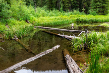 Mountain River Beaver Pond In ...