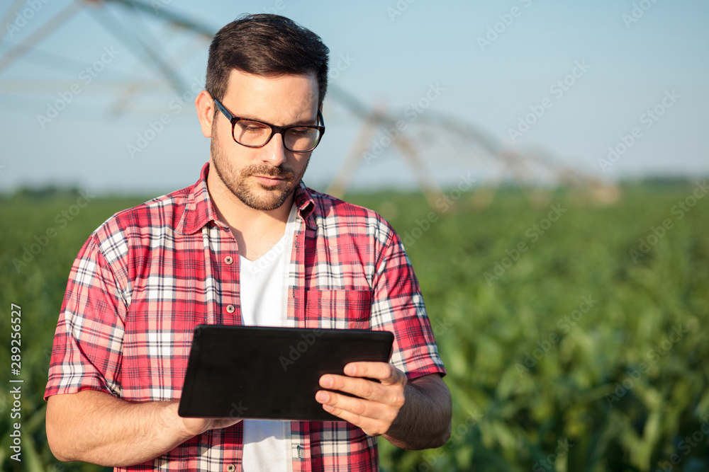 Fototapeta Serious young farmer in red checkered shirt working on a tablet in corn field. Looking at weather forecast or controlling irrigation system. Organic food production