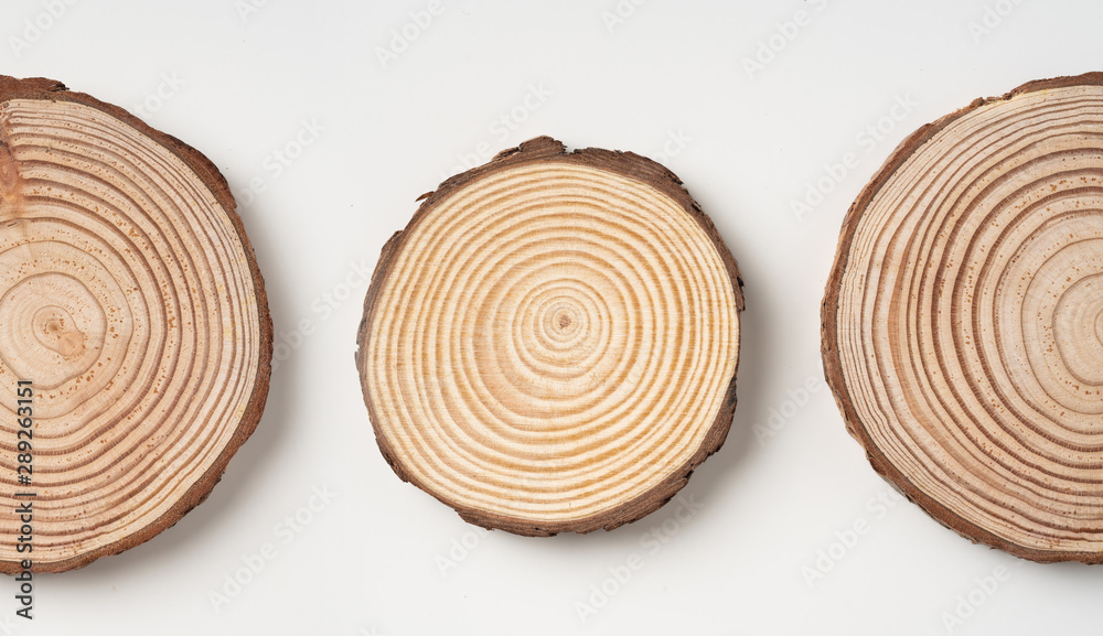Fototapety, obrazy: top view of wood piece with annual ring on white