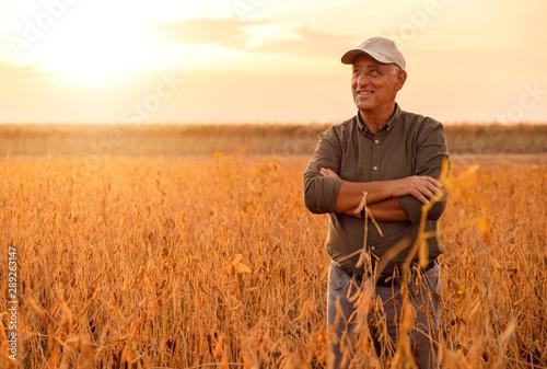 Fototapeta Senior farmer standing in soybean field examining crop at sunset. obraz