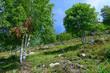 Naturlandschaft im Naturschutzgebiet Feldberg-Belchen-Oberes Wiesental