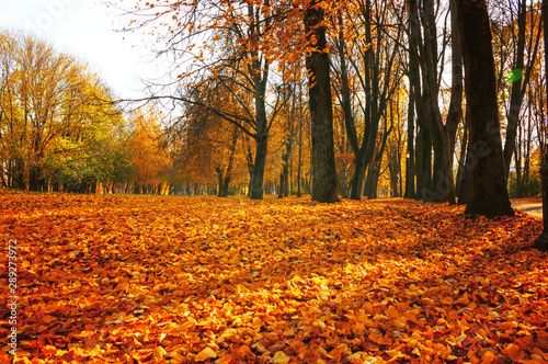 Spoed Foto op Canvas Baksteen Autumn sunny landscape. Autumn park trees and fallen autumn leaves on the ground along the park