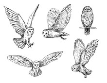 Owl Sketch. Hand Drawn Illustr...