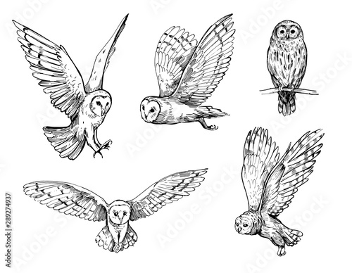 Aluminium Prints Owls cartoon Owl sketch. Hand drawn illustration converted to vector