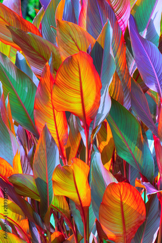 background, colorful, leaves, illuminated, by, sun, large shot - 289302362
