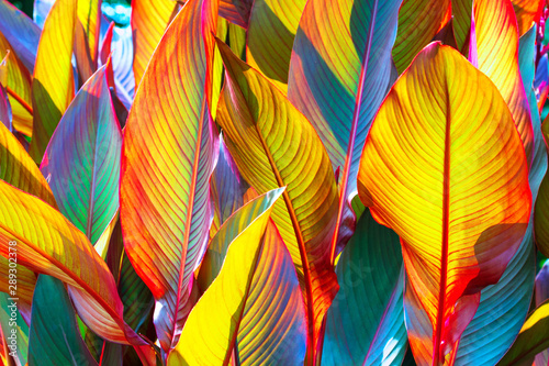 background, colorful, leaves, illuminated, by, sun, large shot Tablou Canvas