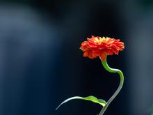 秋の赤い花