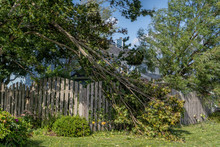 Falling Tree Damage From Hurricane Dorian In Residential Area Of Prince Edward Island, Canada.
