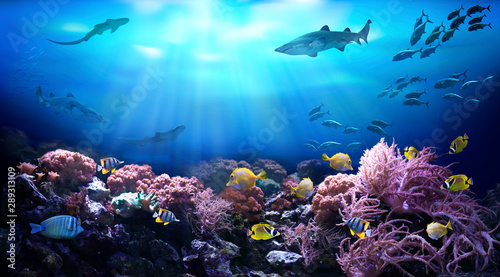 Poster Koraalriffen Underwater view of the coral reef. Life in tropical waters.