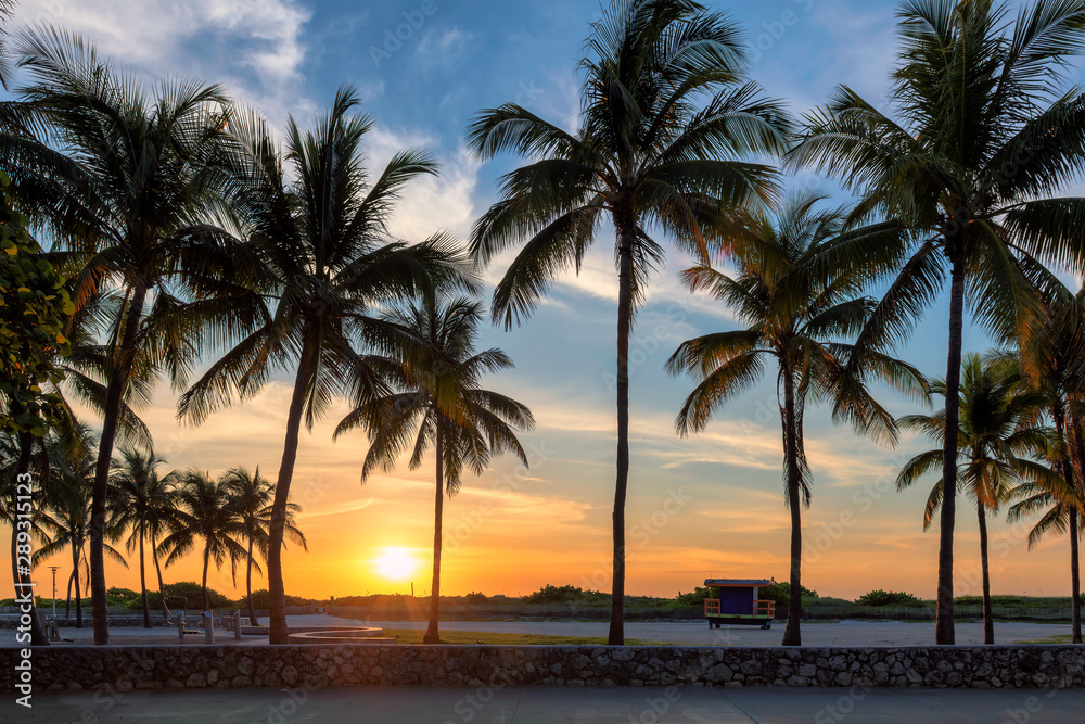Fototapety, obrazy: Palm trees on Miami Beach at sunrise in Ocean Drive, South Beach, Florida